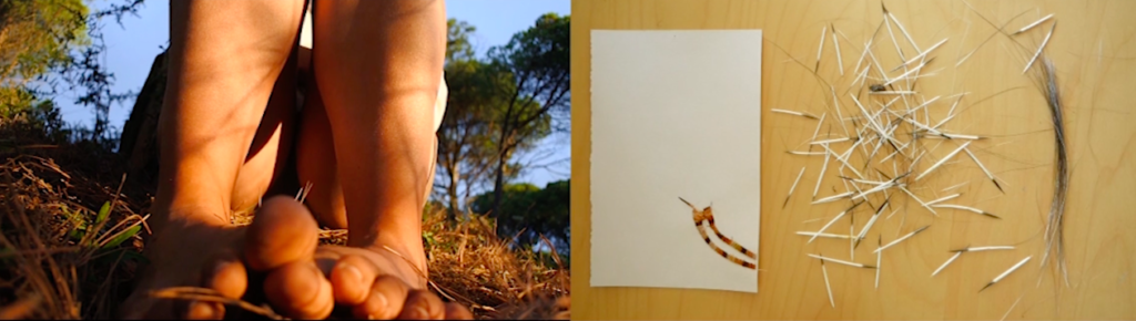 Photo Performance vIEWS OF OUR WORLD:PINE_PORCUPINE Mar Serinyà and Vanessa Dion Fletcher
